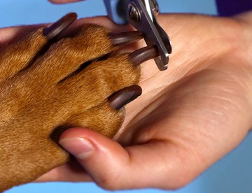 FREE Nail Clipping ($12 value)
